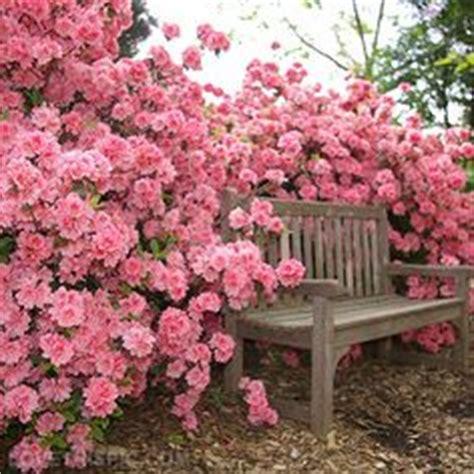 pink flower garden gazing at roses on roses garden growing roses