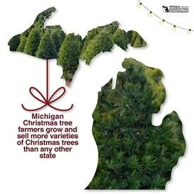 michigan christmas tree association michigan tree facts mada