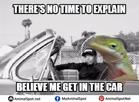 Lizard Toast Meme - lizard meme pictures to pin on pinterest thepinsta