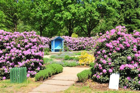 rhododendron hecke duftgarten stiftung bremer rhododendronpark