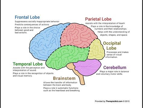 the human brain diagram worksheet tf cbt tools