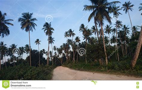 the most beatiful palm avenue the most beatiful palm avenue funzug com the most