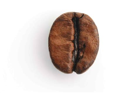 Coffee Di Coffee Bean the images collection of brief single coffee bean png