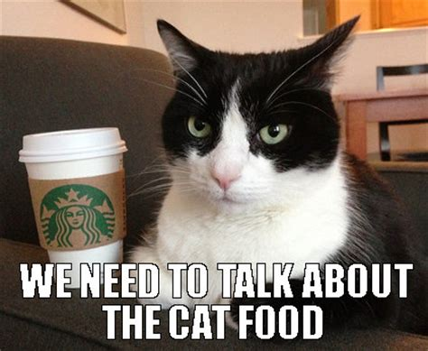 Food Cat Meme - great cats be funny blog november 2015