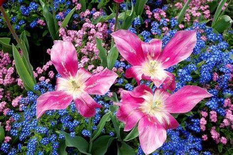 bunga tercantik di dunia serial key for xilisoft video converter ultimate 7 7 3