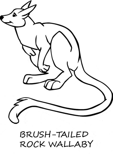 wallaby coloring page printable psalm 23 coloring page