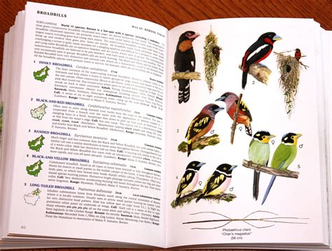 the energy field guide books review phillipps field guide to the birds of borneo