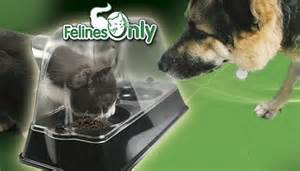 the best ways to keep a out of cat food daily two cents