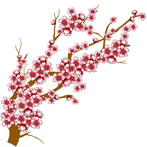 cherry blossom clip cherry blossoms drawing clipart best