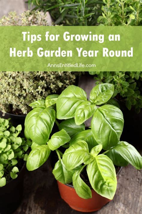 herb garden basics tips for growing an herb garden year round gardens