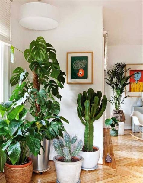 indoor decorative trees for the home indoor plants and palms office plants cool plants