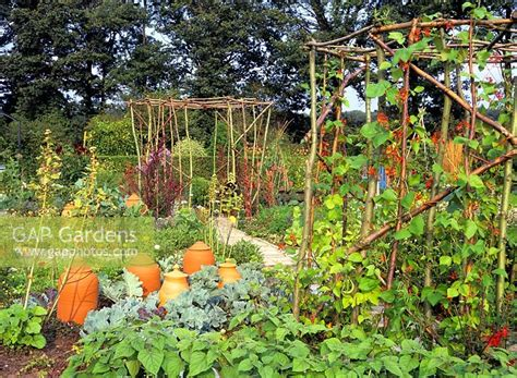 ornamental vegetable garden gap gardens ornamental vegetable garden with terracotta rhubarb forcers and plant supports