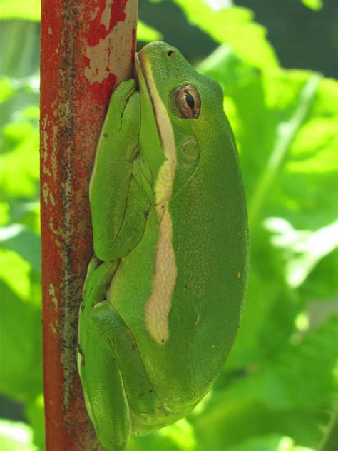how to find frogs in your backyard how to raise tadpoles and frogs in your garden pond hgtv