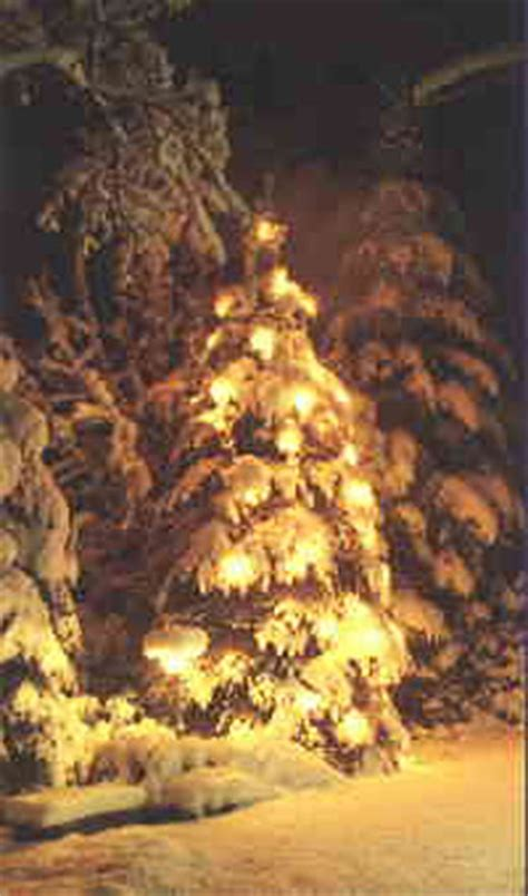 pagan origin of christmas tree the origin of the tree a history that spans centuries of evergreen tree usage is