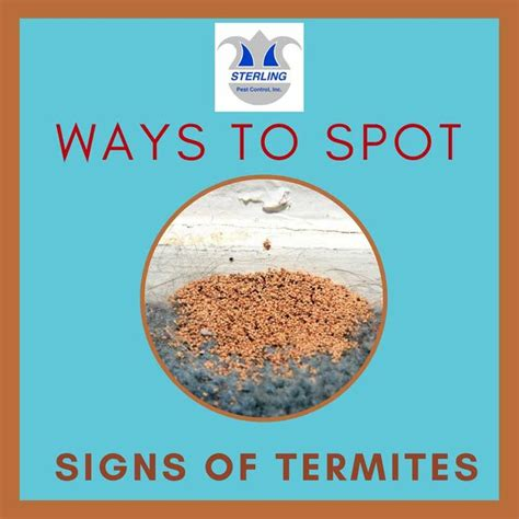 8 Ways To Spot Warning Signs In An Dating Profile 7 best termite pestout pest pestout images