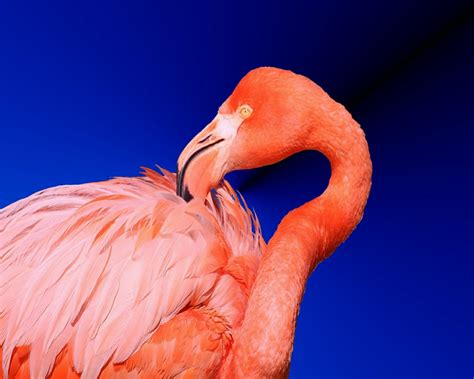 flamingo wallpaper eastenders purple flamingo wallpaper images