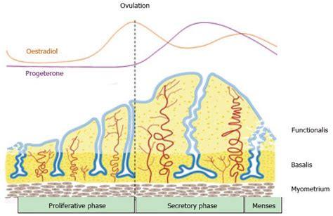 Shedding Of Endometrium by Endometrial Mesenchymal Stem Cells As A Cell Based Therapy
