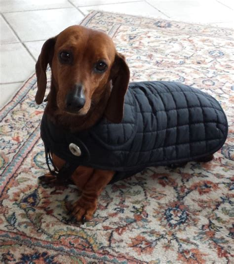 pattern for dachshund dog coat 8 best dog clothes images on pinterest dog accessories