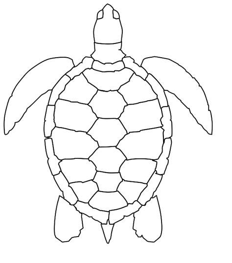 sea turtle template sea turtle puppet template best business template