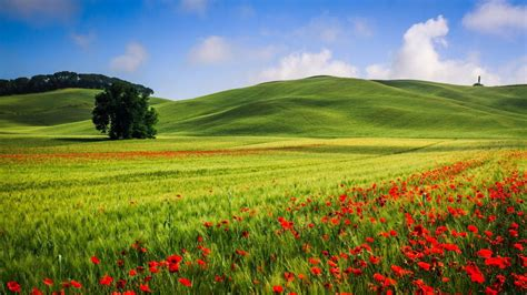 wallpaper beautiful hills meadow landscape trees poppies summer hd widescreen high
