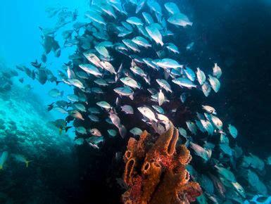 dive barbados scuba diving in barbados resorts packages caradonna