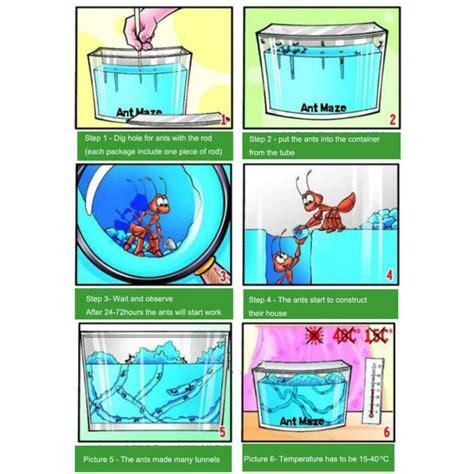 Akuarium Semut aquarium gel ternak semut illuminated blue