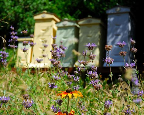 Bee Gardens by Pollinators Aplenty For Pollinator Week Curbstone Valley