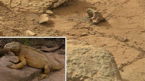 imagenes raras en marte extra 241 a iguana encontrada en marte cosas extra 241 as y