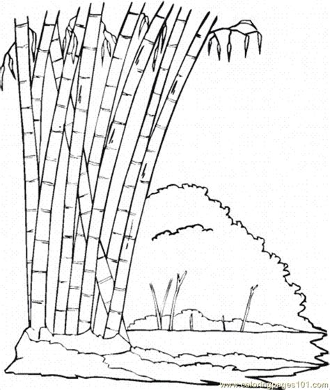coloring pages bamboo 1 natural world gt trees free