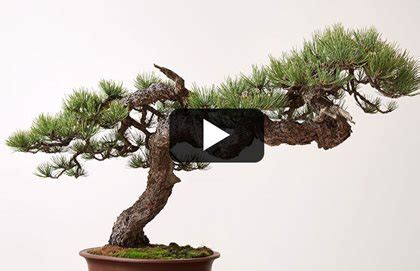 libro bonsai masterclass all you need american bonsai artist garden design