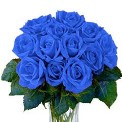 kumpulan gambar bunga mawar biru gambar foto wallpaper