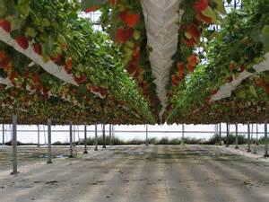 hydroponic gardening in the greenhouse interior design