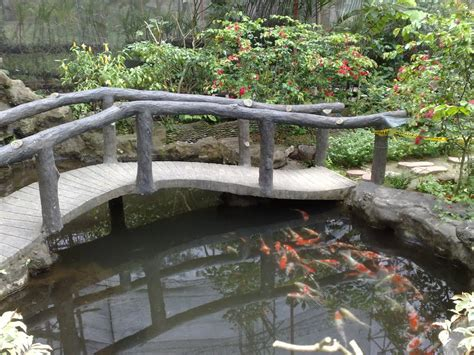 koi pond bridge panoramio photo of bridge over koi pond