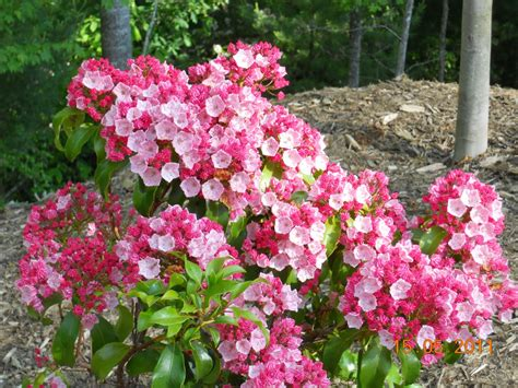 beautiful flowering shrubs to add to your garden home is