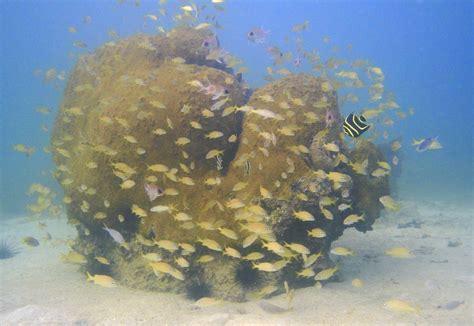 eco dive eco dive coyaba resort snorkeling the