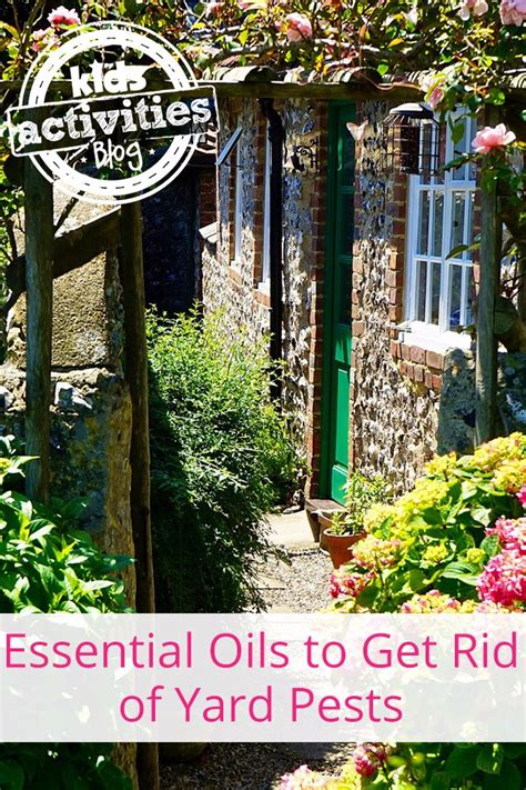 get rid of bugs in backyard get rid of yard pests naturally kids activities