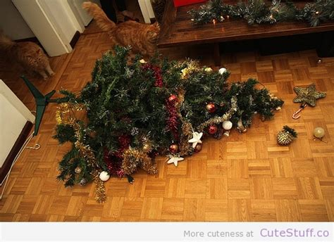 cats knocking over christmas trees the word veterinarians rockford michigan rockford animal hospital