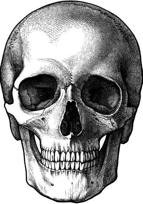 Skulls PNG Image - PurePNG   Free transparent CC0 PNG