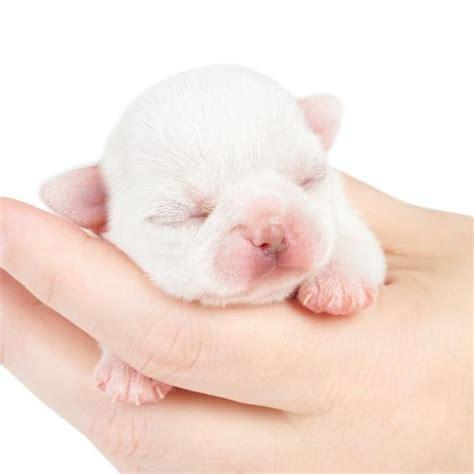 imagenes animales recien nacidos cuidados para perros reci 233 n nacidos