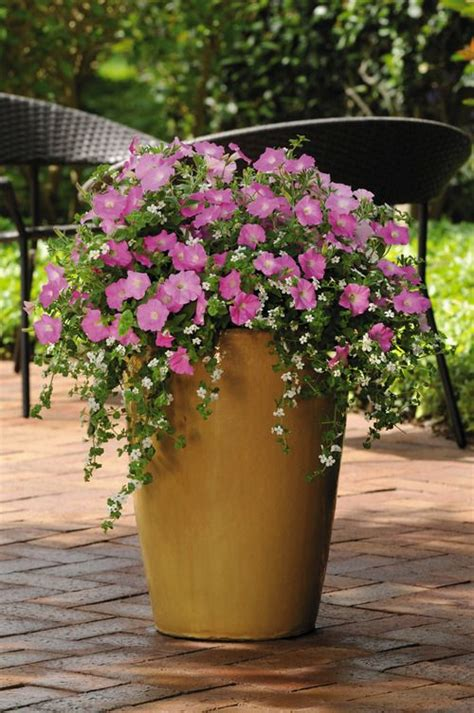 pink combination bacons and pink petunia combination pot flower pots