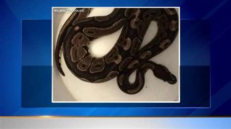 woman finds python in bathroom woman finds python in bathtub abc13 com