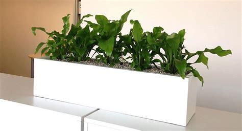 plantes bureau acheter des plantes de bureau chez anygreen