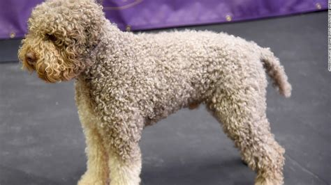 new breeds image gallery new breeds