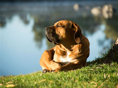 why is my puppy whining 5 reasons your is whining american kennel club