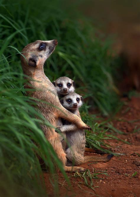 animal families posing  pictures    love animals