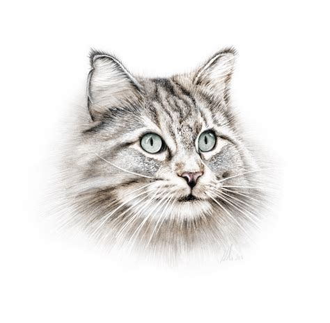 Cat Pencil pencil drawing of a cat www imgkid the image kid has it