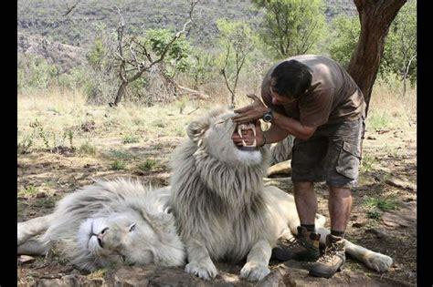 film white lion 2010 plus animaux que ceux de la savane 192 lire