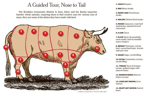 meat sections of a cow ox clipart cow meat pencil and in color ox clipart cow meat