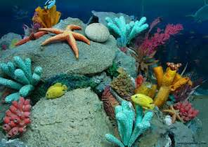 Image result for under the sea life