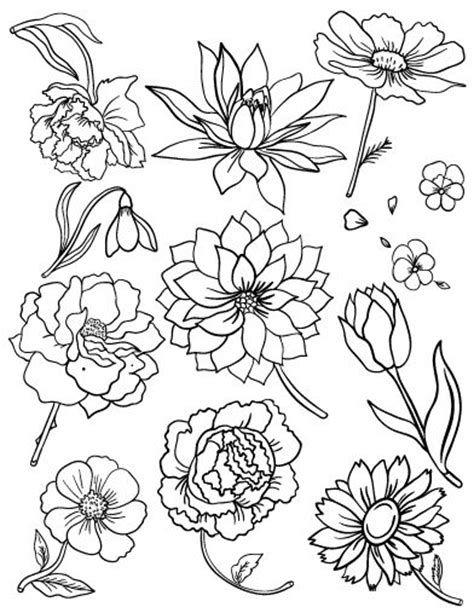 coloring pages flowers pdf 500 best images about floral coloring pages for adults on